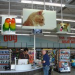 Unleashed by PETCO: Interior